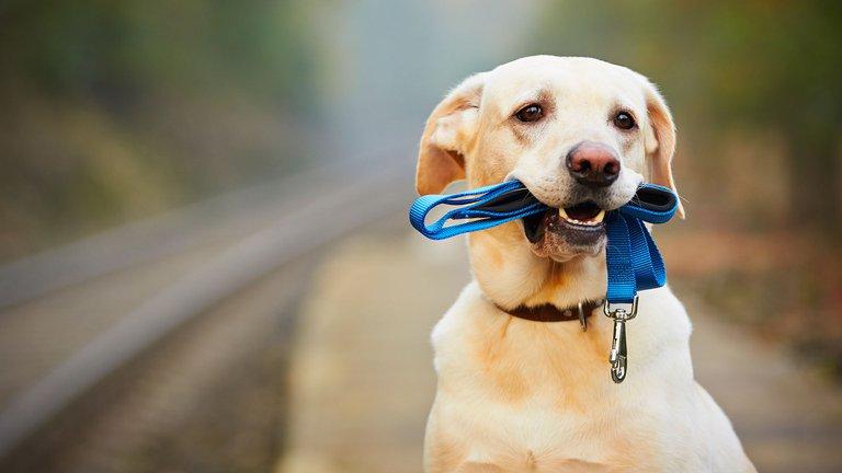 ¿Creés que tenés el Perro más inteligente de todos? Entrá al a nota y comprobalo: las 10 razas más inteligentes